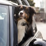 tagg-store-dog-image